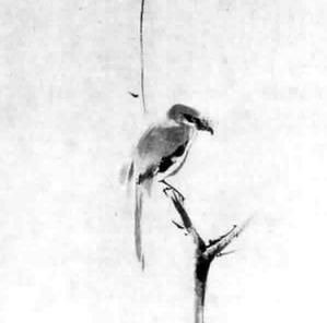 Musashi's Bird